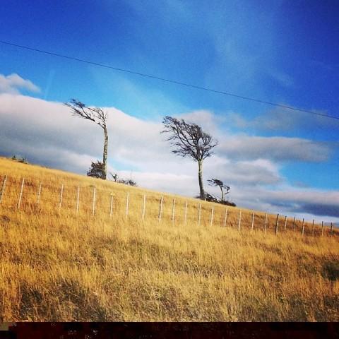 ต้นไม้เอียง แห่งปาตาโกเนีย CR พี่กั้ง