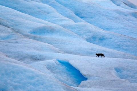 Black Cat on Ice CR พี่ติ่ง