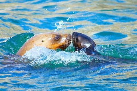 แม่ลูกสอนว่ายน้ำ CR พี่ปุ๊