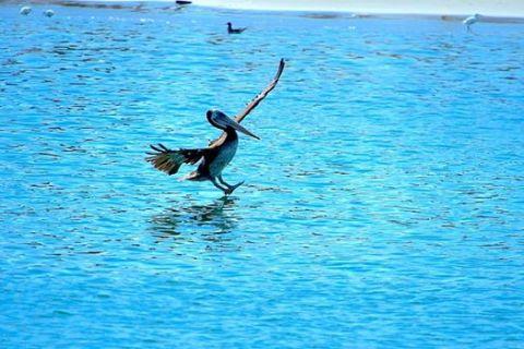 Landing Pelicans CR พี่ปุ๊