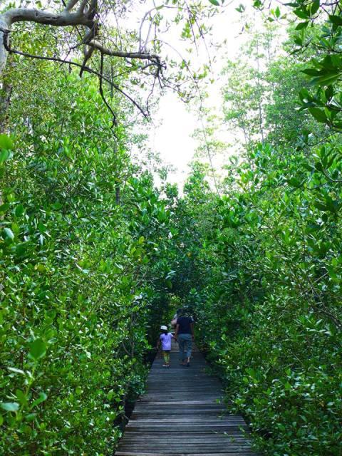ในป่าโกงกาง
