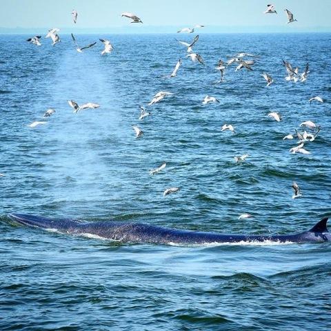 วาฬพ่นน้ำ