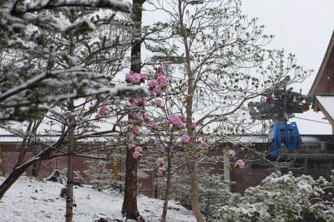 หิมะ-ดอกไม้-กระเช้า