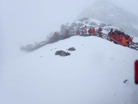 หิมะขาวโพลน