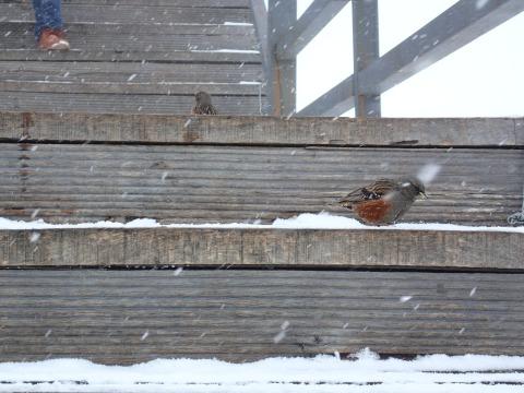 นกตัวน้อยสู้กับหิมะชมการแสดงกลางแจ้ง บริเวณภูเขาหิมะมังกรหยก