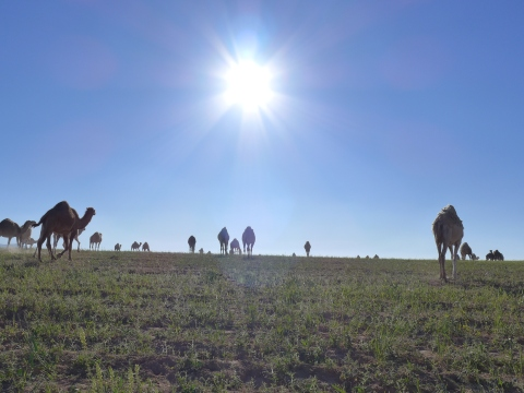 Along the way with heaps of camels